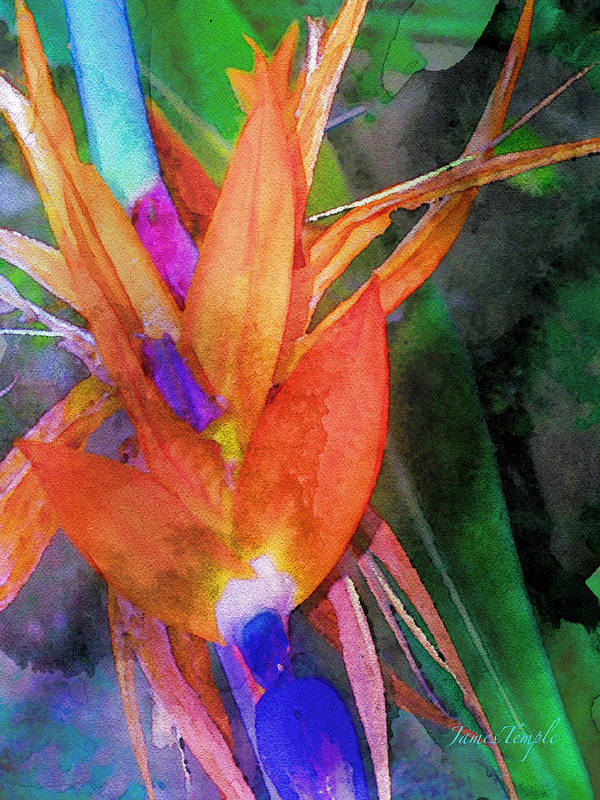 Bird Of Paradise Poster featuring the digital art Hawaiian Abstract by James Temple