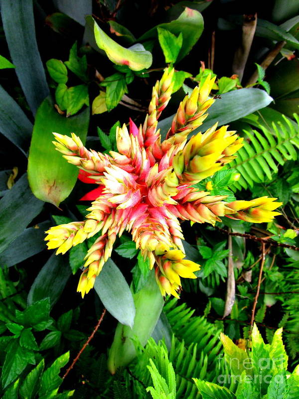 Flower Poster featuring the photograph Hawaiian Beauty 3 by Randall Weidner