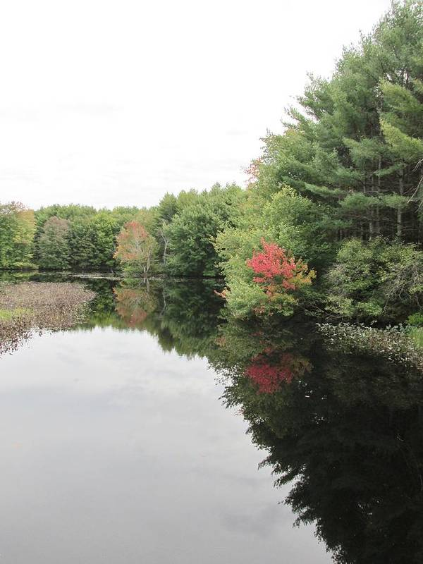 Lynne Miller Poster featuring the photograph Haybrook Maine Foliage 6 by Lynne Miller