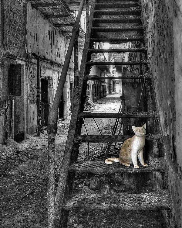 Abandoned Poster featuring the photograph Here Kitty Kitty Kitty... by Evelina Kremsdorf