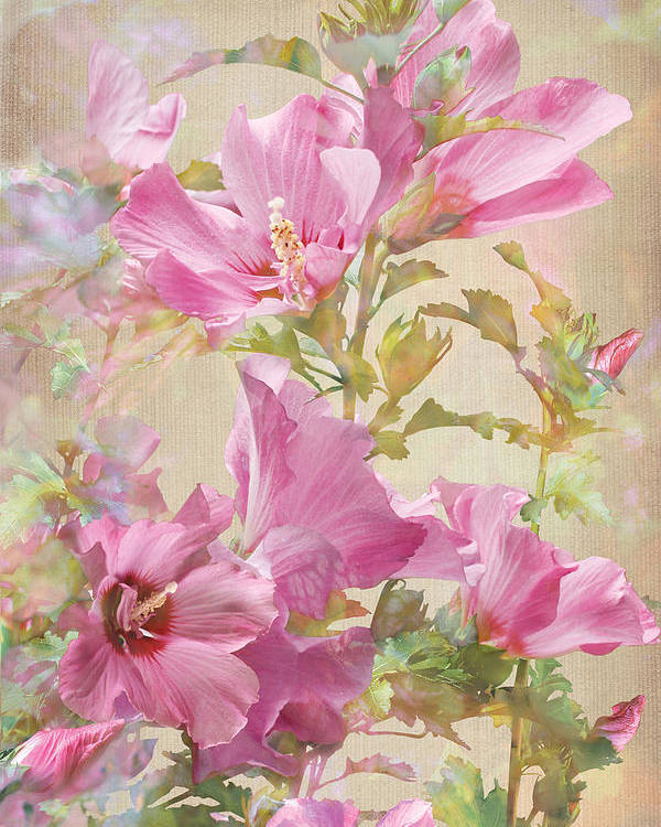 Hibiscus Poster featuring the photograph Hibiscus Impression by Robert Masheris
