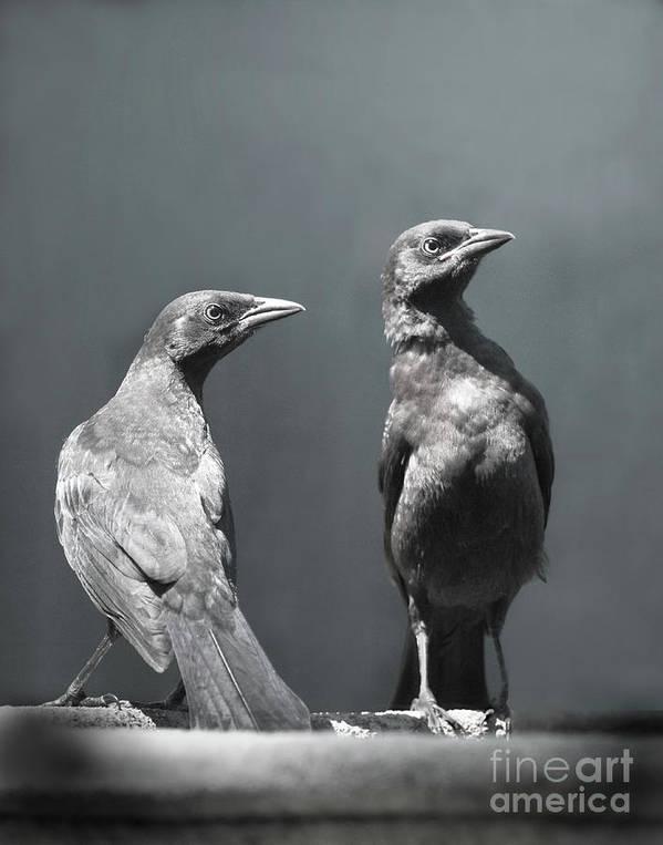 Birds Poster featuring the photograph High Alert by Jan Piller