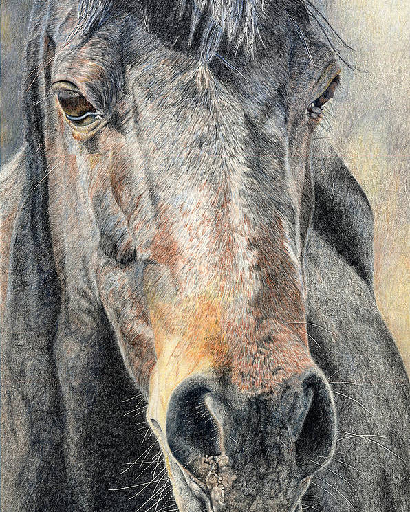 Horse Poster featuring the drawing High Desert by Joanne Stevens