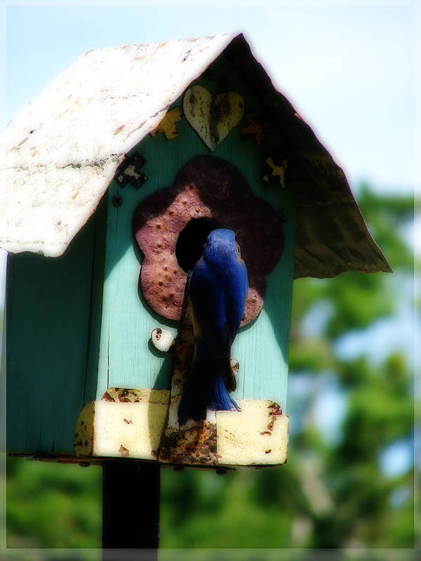 Bluebird Poster featuring the pyrography Home Again by Laura Brightwood