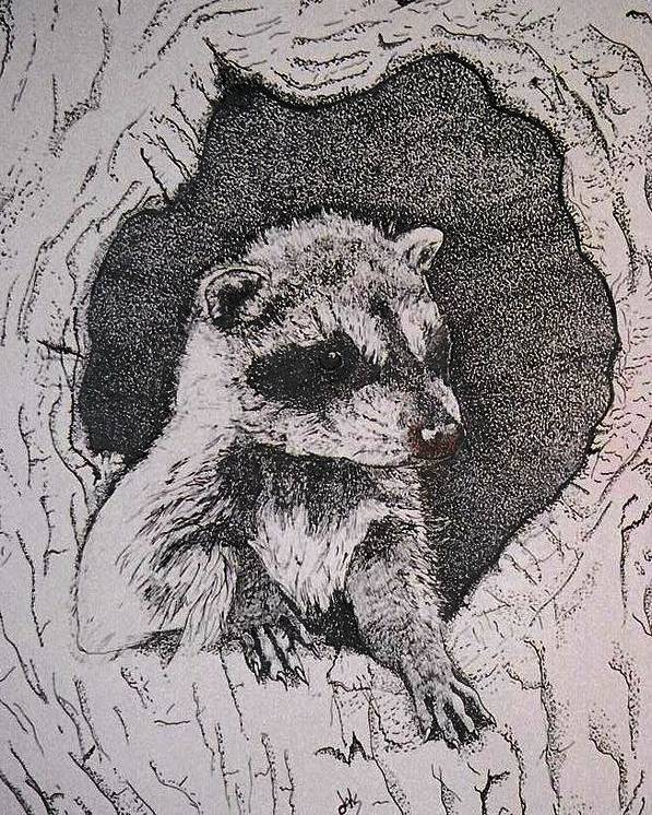 Raccoon Poster featuring the drawing Home by Debra Sandstrom