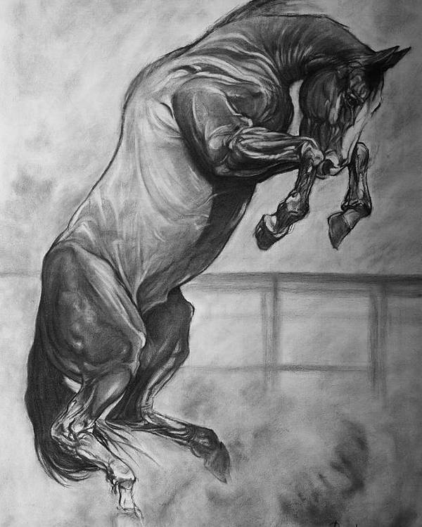 Horse Poster featuring the drawing Horse by Desimir Rodic