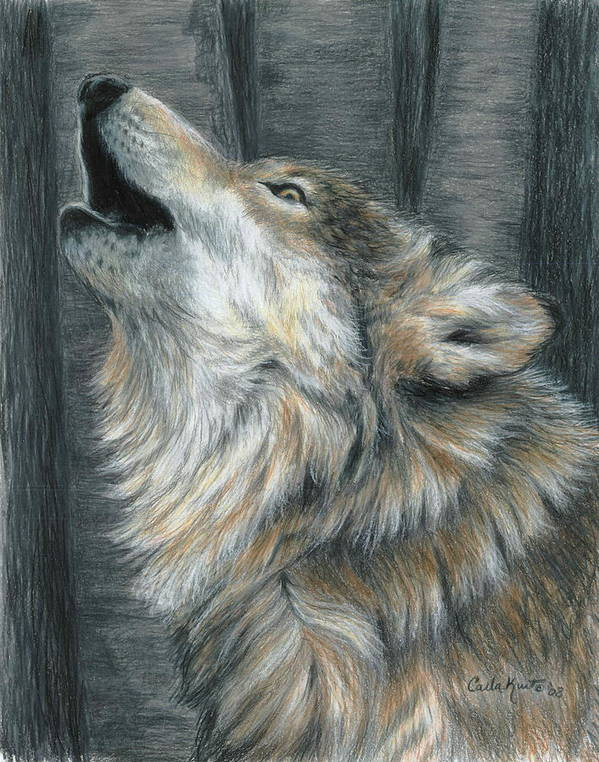 Wolf Poster featuring the drawing Howling Wolf by Carla Kurt