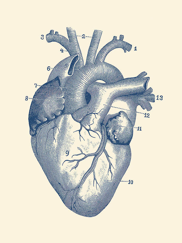 Human Heart Diagram - Vintage Anatomy Poster by Vintage Anatomy Prints