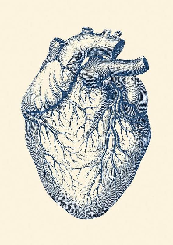 Human Heart - Vintage Medical Poster by Vintage Anatomy Prints
