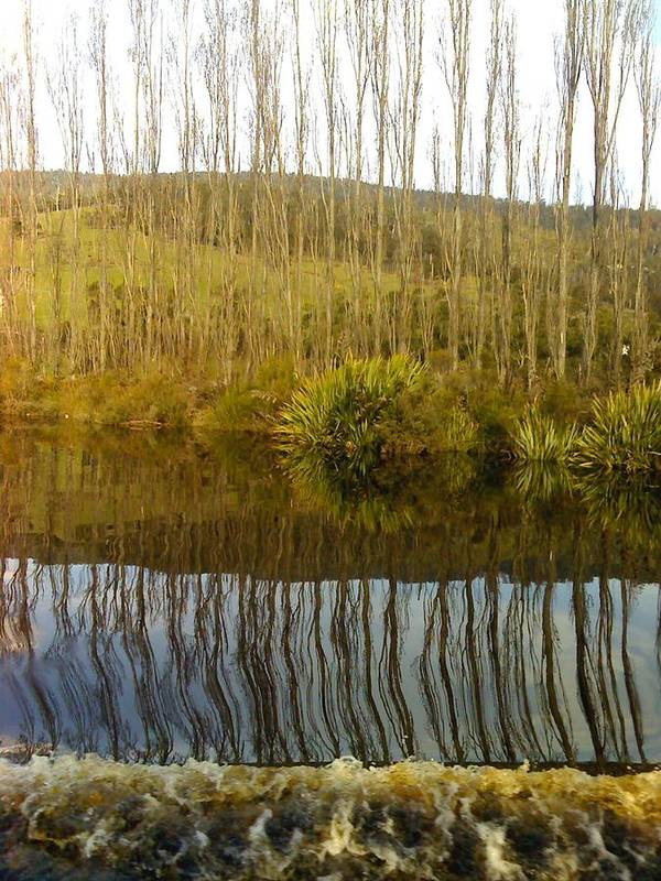 River Reflections Trees Poplars Landscape Poster featuring the photograph Huon Poplars by Bethwyn Mills