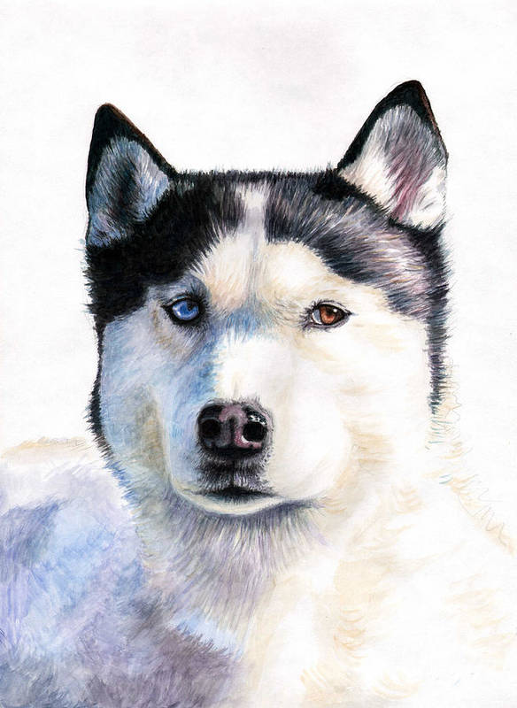 Dog Poster featuring the painting Husky Blue by Nicole Zeug