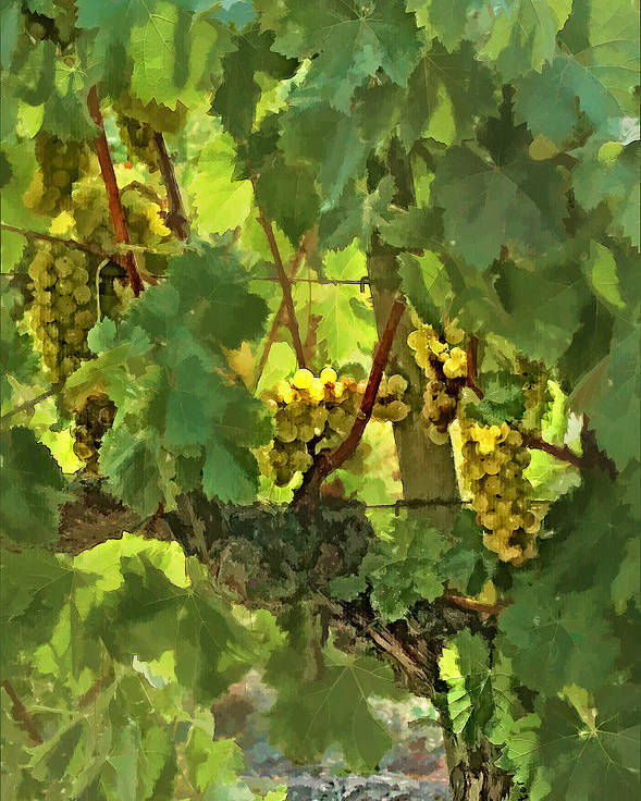 Grapes Poster featuring the digital art I Heard It On The Grapevine by Patricia Stalter