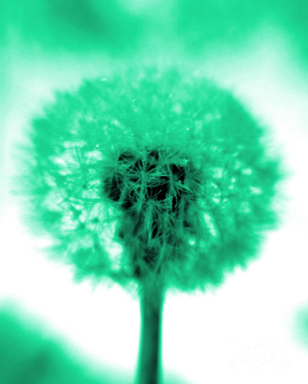 Dandelion Poster featuring the photograph I Wish In Aqua by Valerie Fuqua