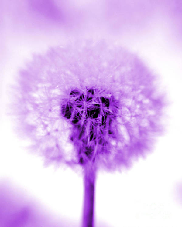 Purple Poster featuring the photograph I Wish In Purple by Valerie Fuqua