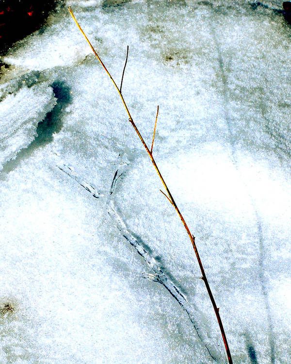 Nature Poster featuring the photograph Ice Shadow by Lisa Kane