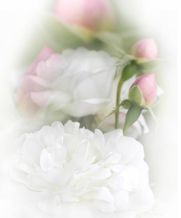 Rose Poster featuring the photograph Illusions Of White Roses And Pink Rosebuds by Jennie Marie Schell