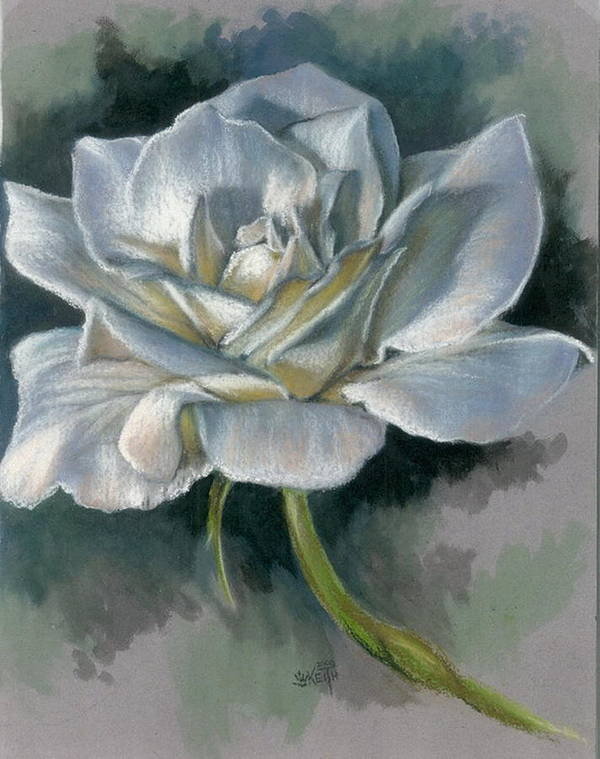 Rose Poster featuring the mixed media Innocence by Barbara Keith