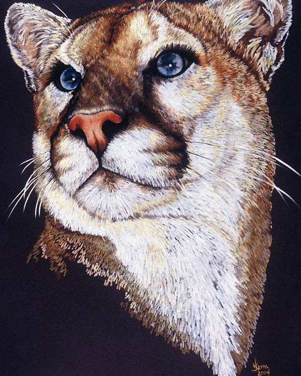 Cougar Poster featuring the drawing Intense by Barbara Keith