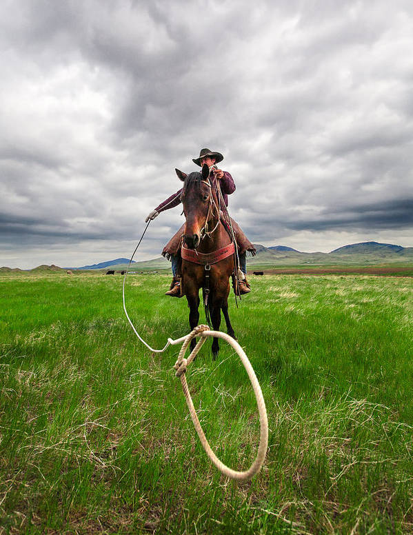 Cowboy Poster featuring the photograph Invisible Calf by Todd Klassy