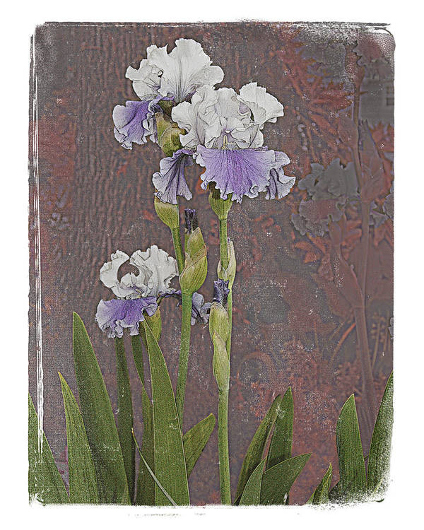 Flowers Poster featuring the photograph Iris 3 by Inesa Kayuta