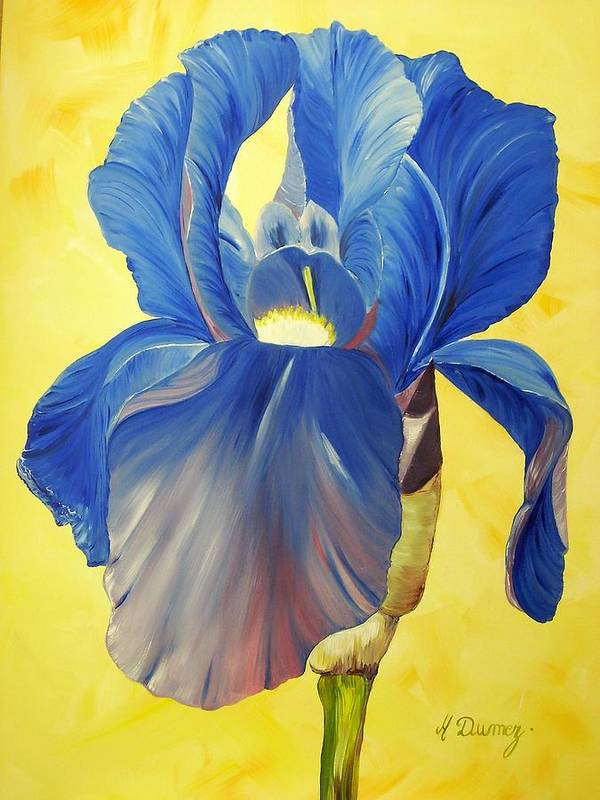 Flower Poster featuring the painting Iris by Murielle Hebert