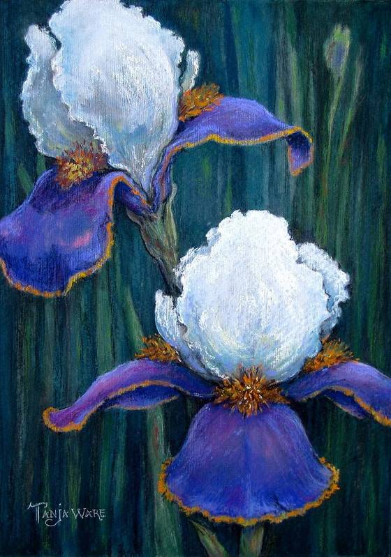 Floral Poster featuring the painting Irises by Tanja Ware