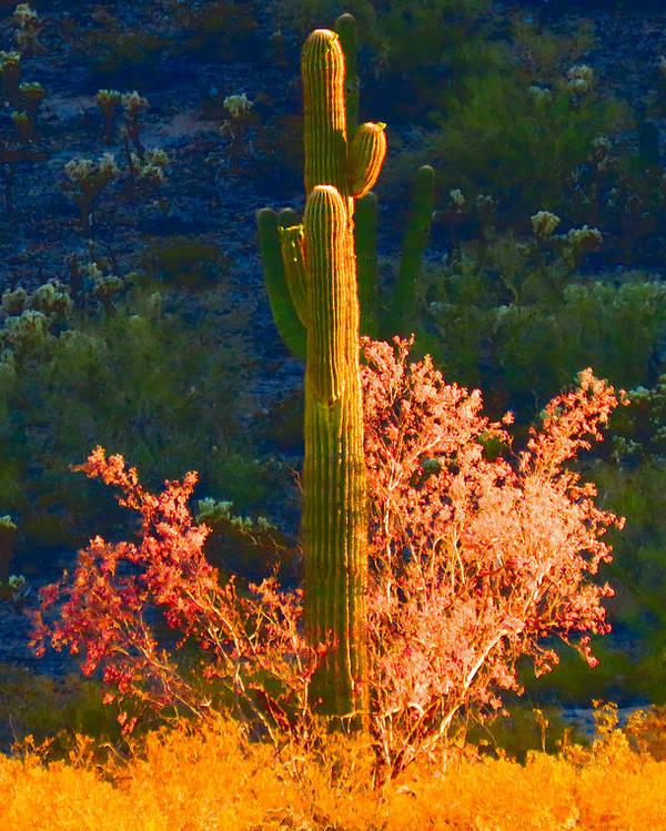 Arizona Poster featuring the photograph Ironwood Saguaro Dance - Bold by Judy Kennedy