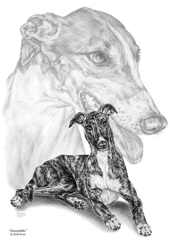 Greyhound Poster featuring the drawing Irresistible - Greyhound Dog Print by Kelli Swan