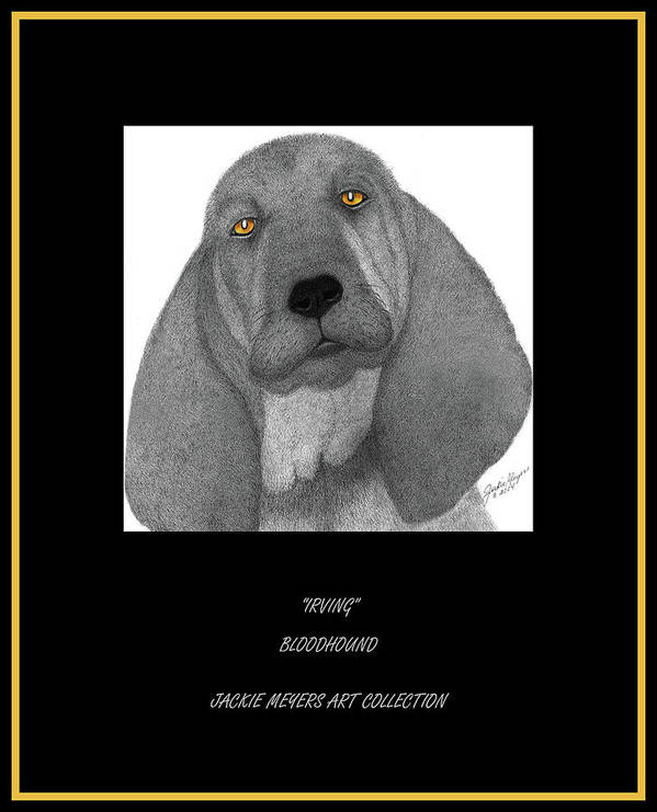 Bloodhounds Poster featuring the drawing Irving by Jackie Meyers