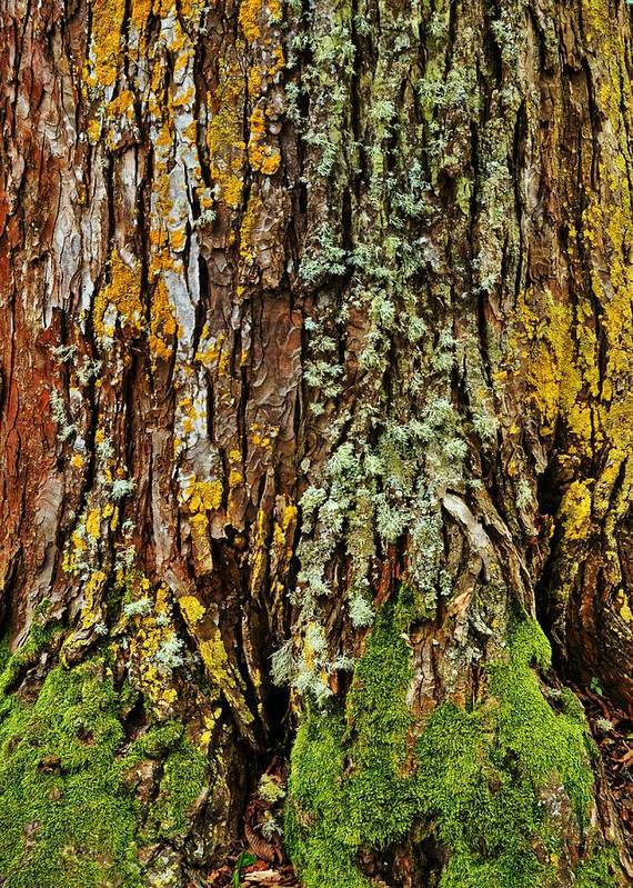 Tree Poster featuring the photograph Island Moss by JAMART Photography