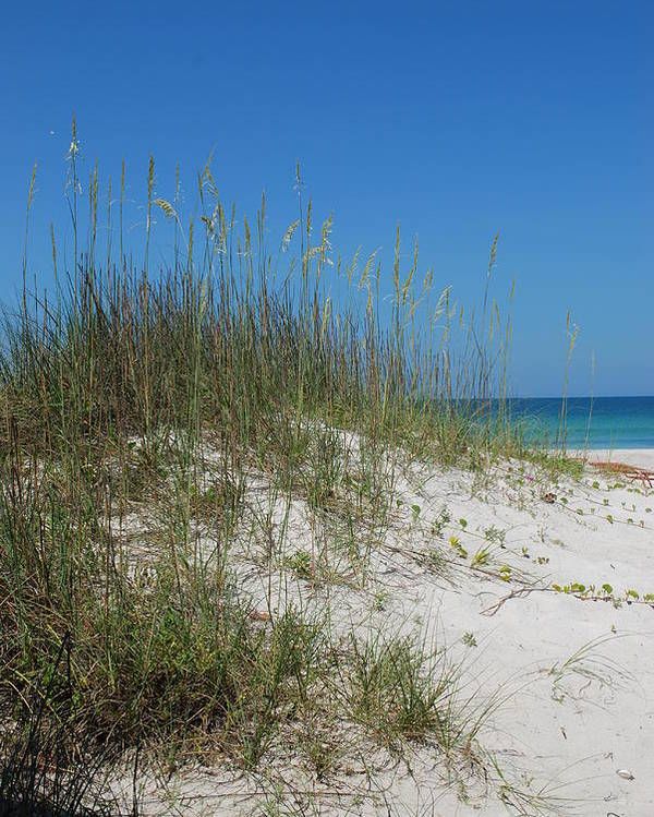 Beach Poster featuring the photograph Island Sea Oats by Lisa Gabrius