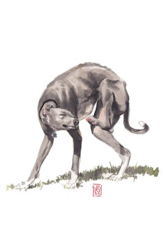 Italian Greyhound Poster featuring the painting Itchy Italian by Debra Jones