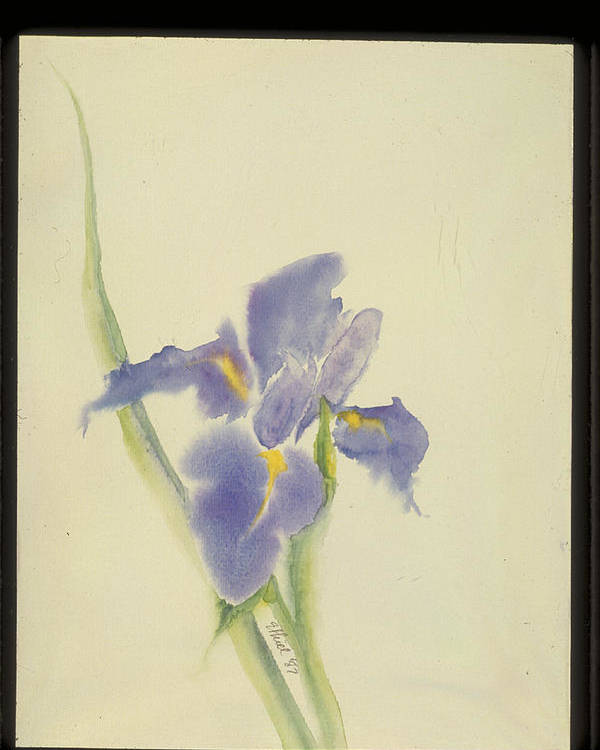 Watercolor Poster featuring the painting Japanese Iris by Nancy Ethiel