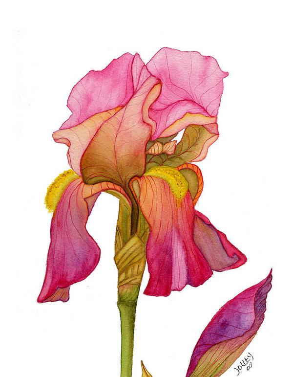 Bearded Iris Poster featuring the painting Jody's Iris by Stephanie Jolley