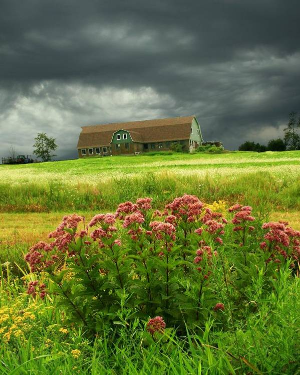 Wildflowers Poster featuring the photograph Joe Pye Weed And Barn by Roger Soule