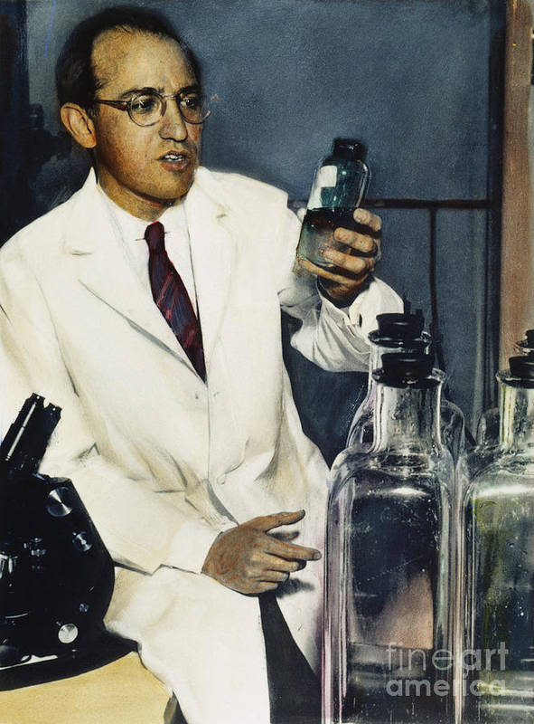 1950s Poster featuring the photograph Jonas Salk (1914-1995) by Granger