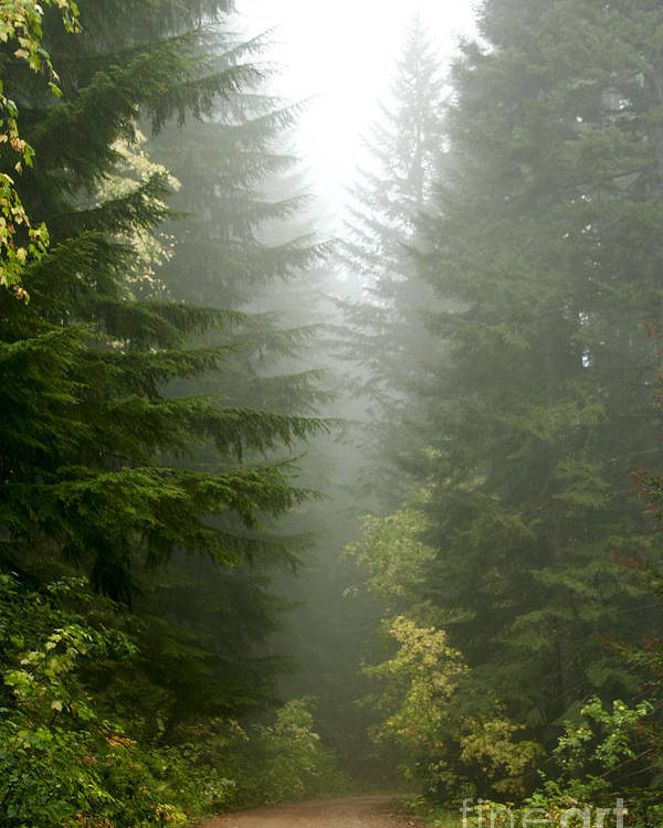 Forest Poster featuring the photograph Journey Through The Fog by Idaho Scenic Images Linda Lantzy