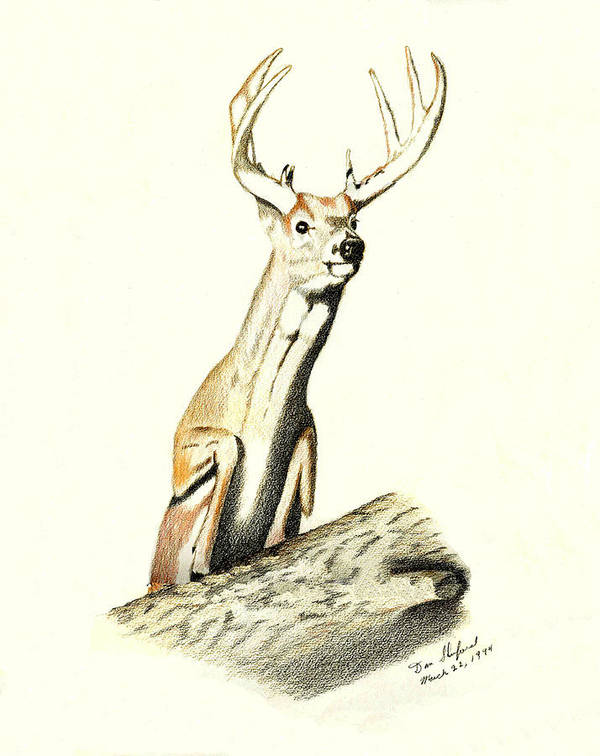 Dan Shuford Poster featuring the drawing Jumping Buck by Daniel Shuford