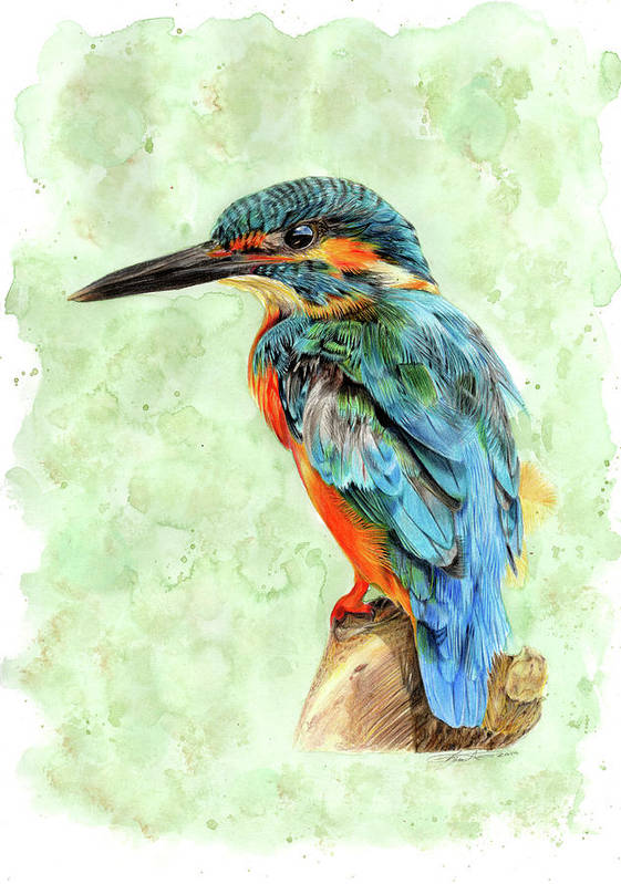 Pencil Drawing Poster featuring the drawing Kingfisher Blue by Bonnita Moaby