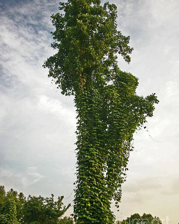 Tree Poster featuring the photograph Kudzu Sculpture by Beebe Barksdale-Bruner