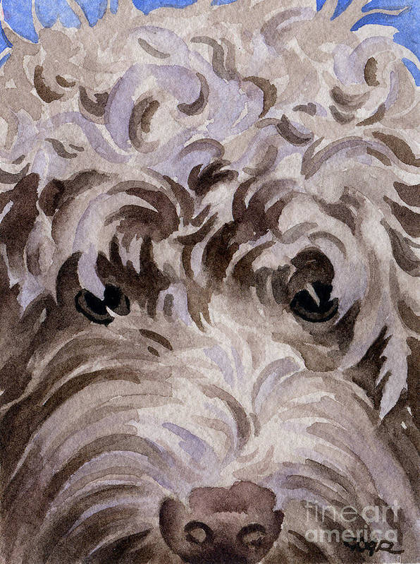 Labradoodle Poster featuring the painting Labradoodle by David Rogers