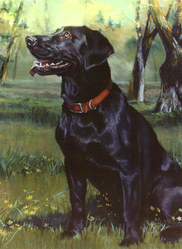 Dog Poster featuring the painting Labrador Retriever by Jean Hildebrant