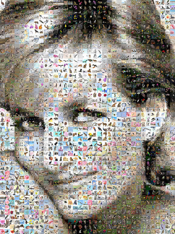 Mosaic Poster featuring the digital art Lady D by Gilberto Viciedo