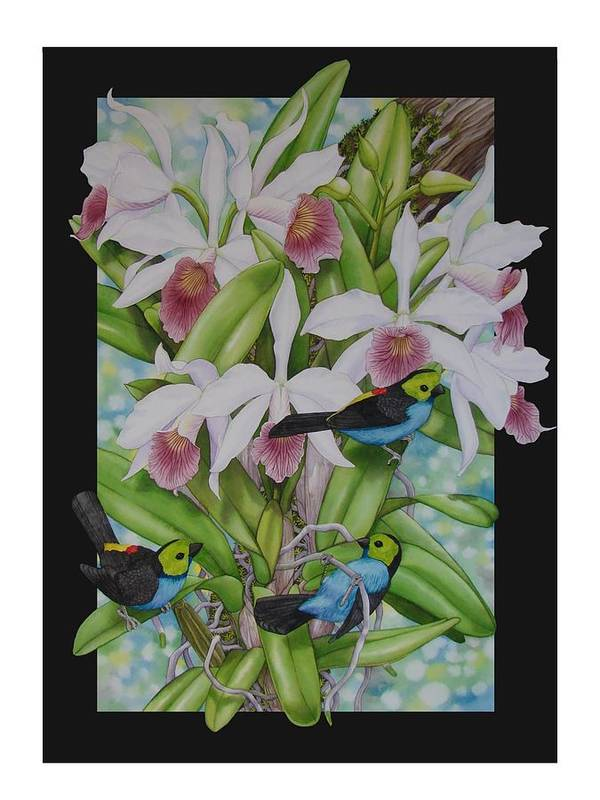 Orchids Poster featuring the painting Laelia Purpurata by Darren James Sturrock