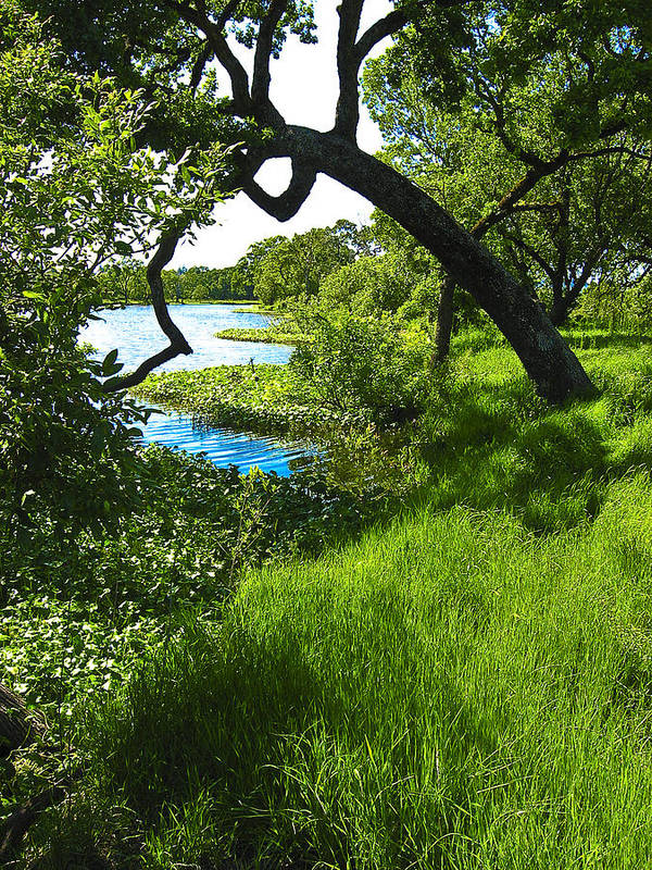 Landscape Poster featuring the photograph Laguna De Santa Rosa by John S Lushenko
