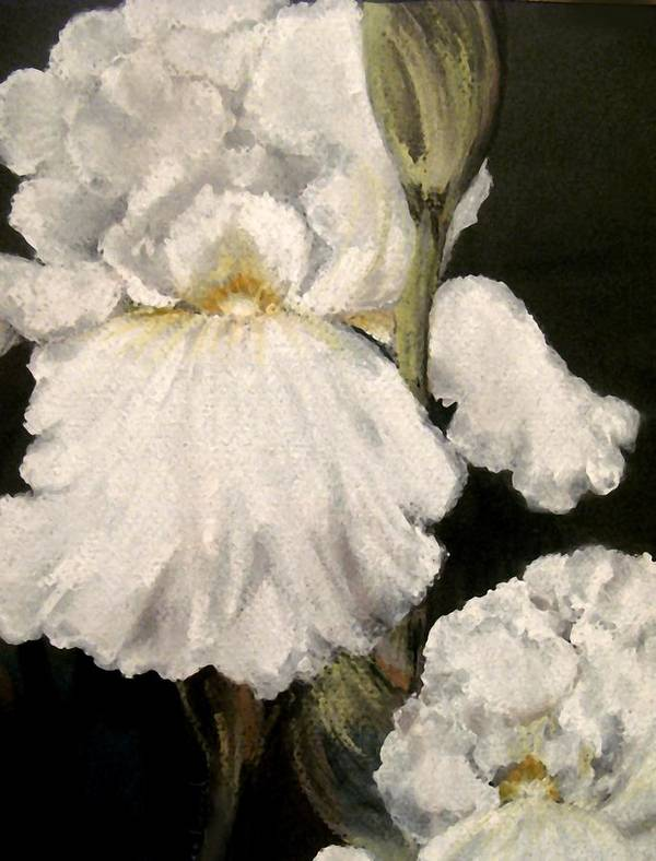 Pastel Poster featuring the painting Large White Iris by Carol Sweetwood