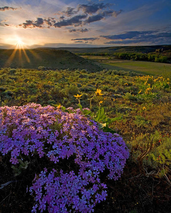 Wildflowers Poster featuring the photograph Last Light Of Spring by Mike Dawson