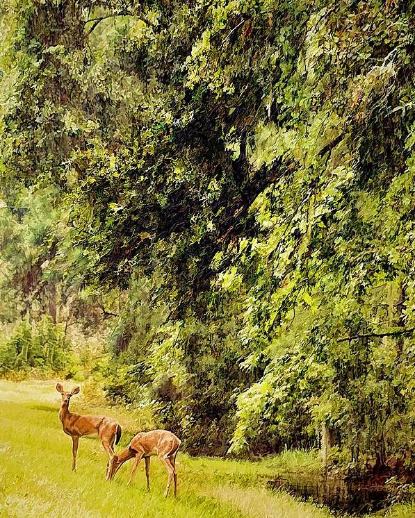 Wildlife Poster featuring the photograph Late Summer Deer by Jan Amiss Photography
