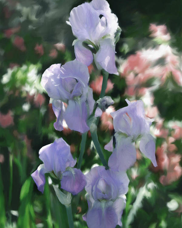 Iris Poster featuring the digital art Laughing Iris by Susan Lipschutz