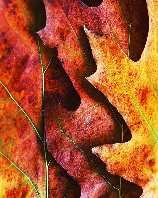 Autumn Poster featuring the photograph Layers Of Shades Of Autumn by Vishwanath Bhat